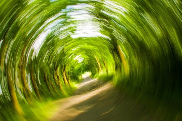 Spinning and blurred tree tunnel